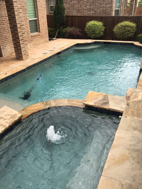 Pool Draining and Cleaning